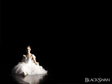 Blackswan_wall05_640x480