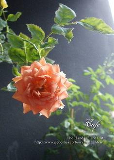 Cafe20060626