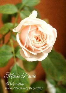 marie1031_1