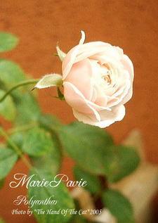 marie1031
