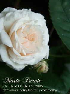 Marry_2006051602