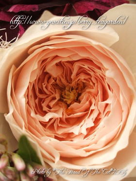 rose0509-4